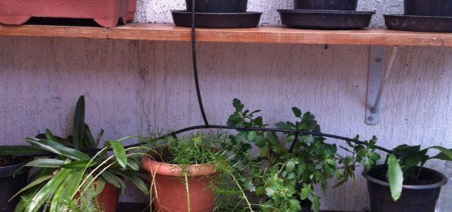 O Jarduíno de casa está deixando minhas plantas lindas!